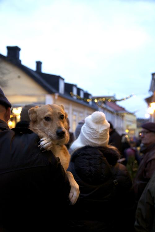 Porvoon joulunavajaisissa koira sylissä